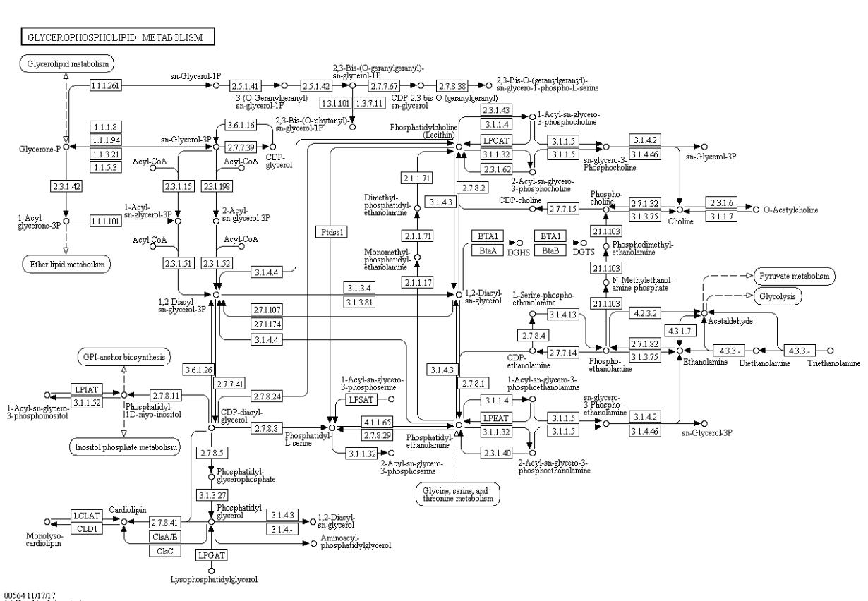 Fig. 3. Metabolic pathway chart of glycerophospholipid metabolism