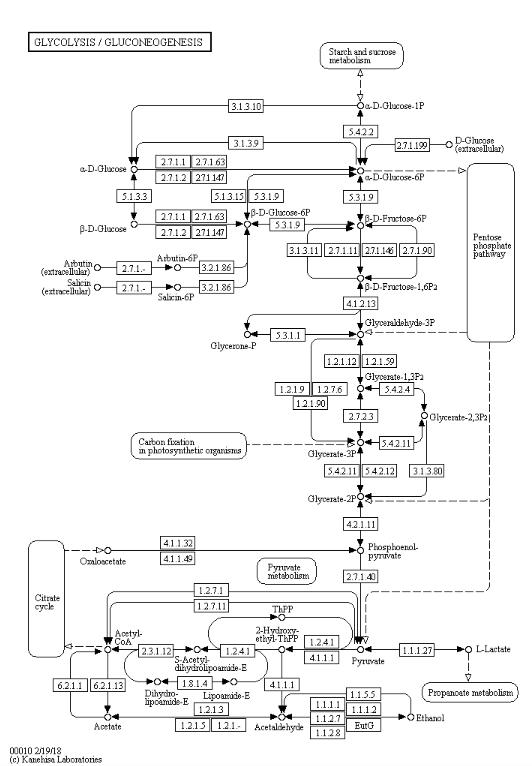 Fig. 8. Glycolysis in KEGG