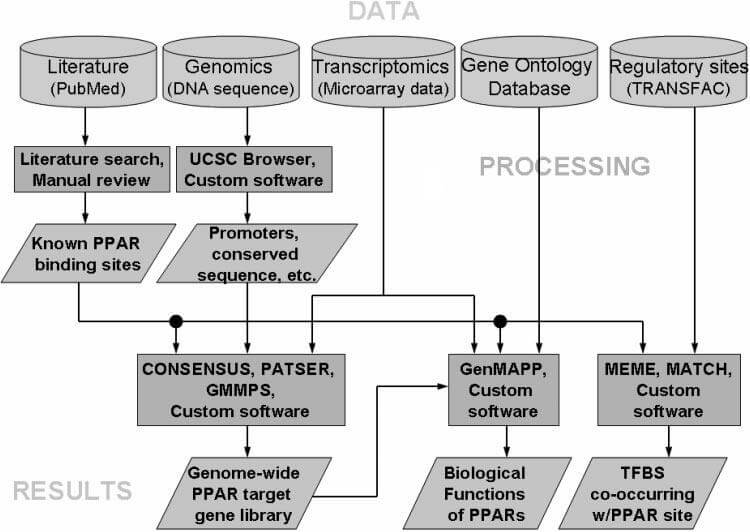 Figure 1. Integration of databases and software to predict genes regulated by Peroxisome-Proliferator (according to Lemay et al., Am J Clin Nutr 2007;86:1261–9)