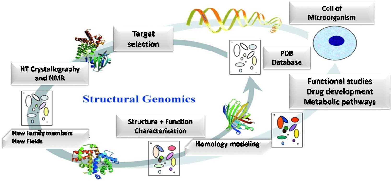 Fig. 1. Structural Genomics