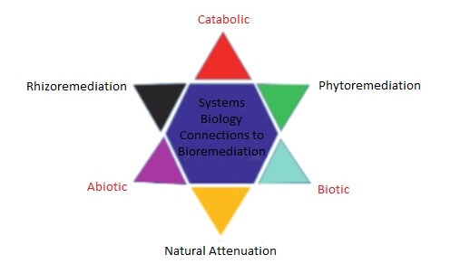 Figure 2. Systems biology connections to bioremediation (Koehmel et al.
