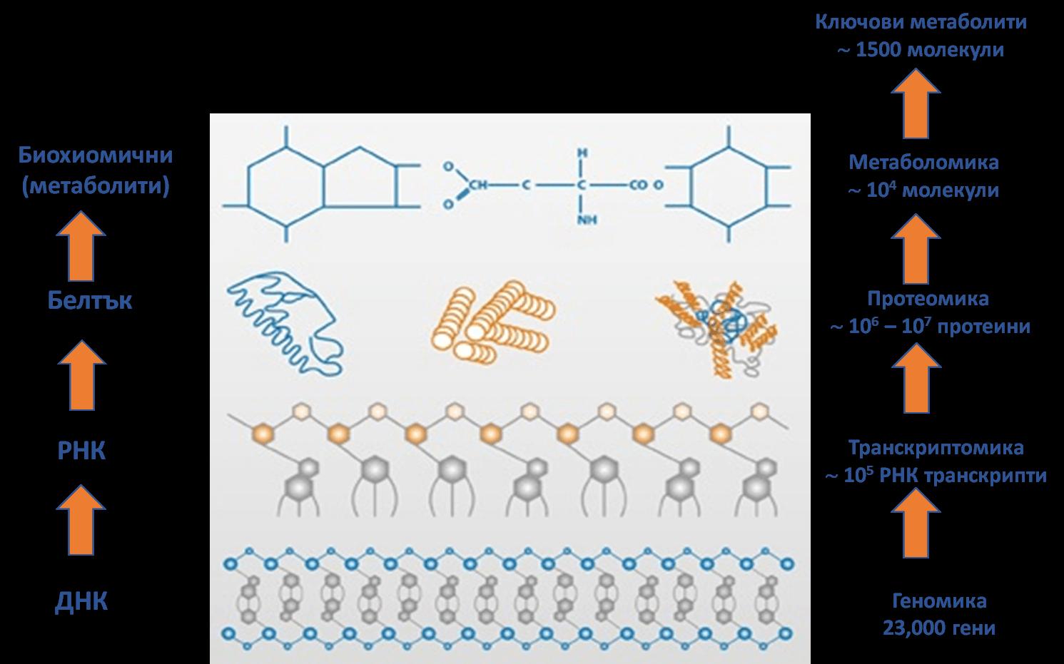 Фиг. 2. Технология на метаболомиката