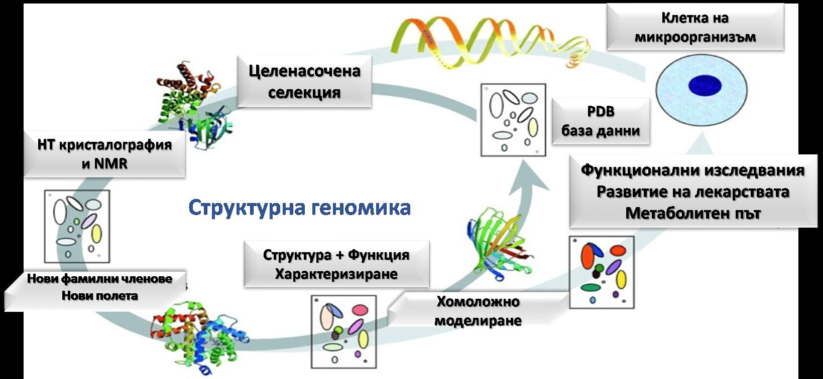 Фиг. 1. Структурна геномика