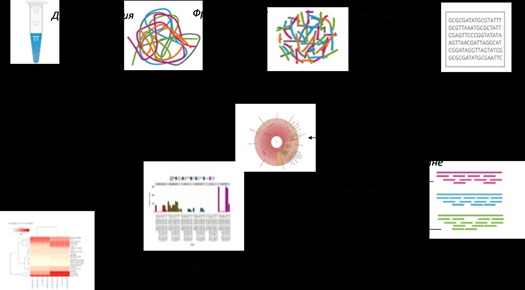 (Фиг. 5). Метагеномен анализ