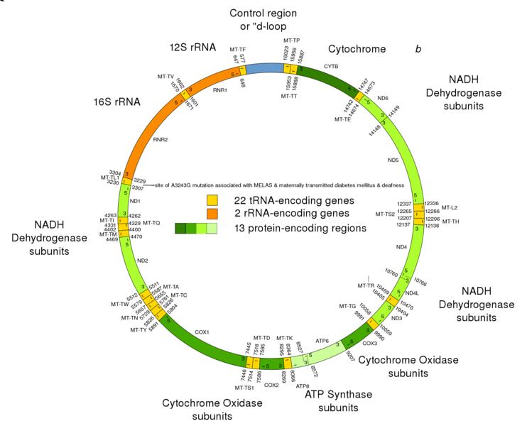 Фиг. 3. Митохондриален геном Фиг. 4. Пластом