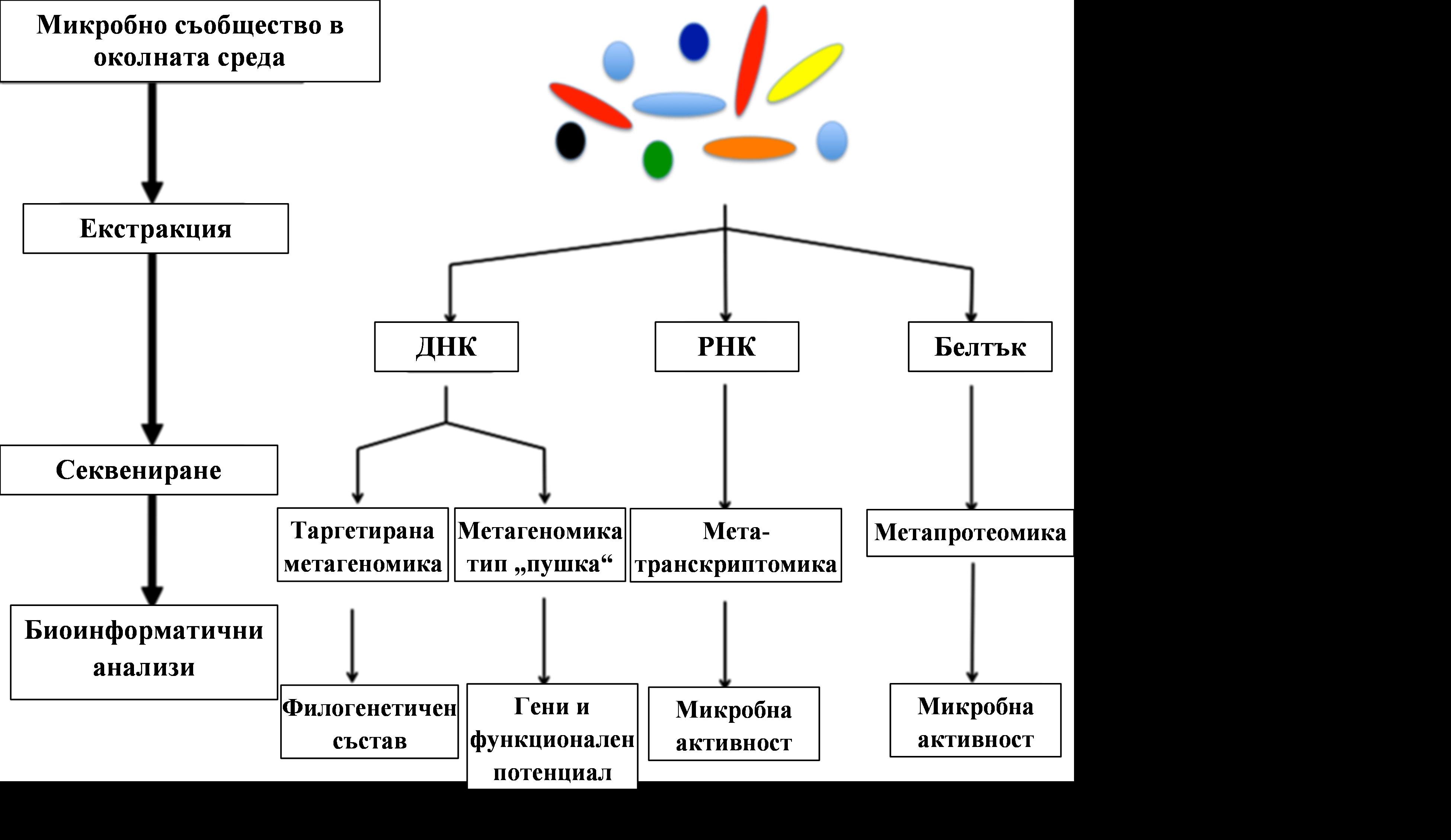 Фигура 4. Метагеномни подходи за изучаване на микробните съобщества