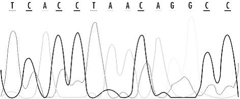 Εικόνα 2. Το παραγόμενο αποτέλεσμα του ανιχνευτή από ένα πείραμααλληλούχισης