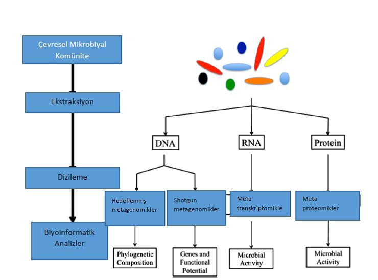 Figure 4. Mikrobiyal kmünitelerin anlaşılmasında metagenomik yaklaşımlar
