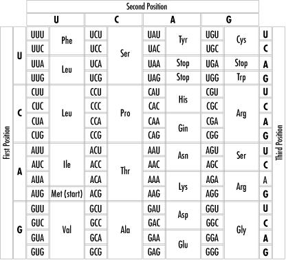 Şekil 4. Genetik kod