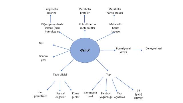 Şekil 5. Tek bir gen ile ilişkili bilgiler